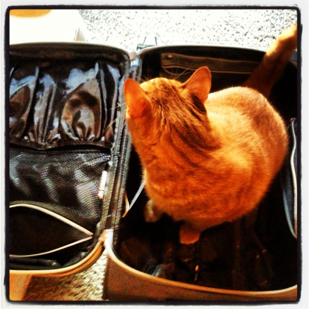 BJ- Suitcase
