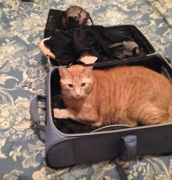 At least I remembered to pack undergarments, a shoe, and this cat.